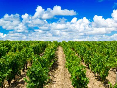 Víno šité na míru | CigarClubMagazine